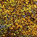 Branches Of Gold by Jo-Anne Gazo-McKim