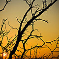 Branches Reaching The Sunset by Anthony Doudt