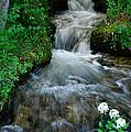 Breckenridge Falls by Lynn Bauer