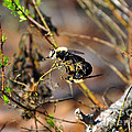 Breeding Bees by Al Powell Photography USA