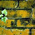 Brick Ivy by Mike Nellums