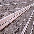Brick Rays by Ausra Huntington nee Paulauskaite