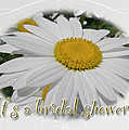 Bridal Shower Invitation - White Ox Eye Daisy by Mother Nature