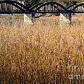 Bridge And Pampas Grass by Mats Silvan