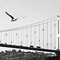 Bridge And Seagull, Bosphorus, Istanbul, Turkey by Gulale