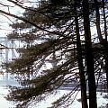 Bridge In The Fog 2 by Mark Dodd