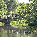 Bridge Near The Charles by Patricia Williams