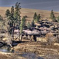 Bridge Over A Creek by One Rude Dawg Orcutt