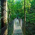 Bridge by Simone Pastore