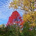 Bright Autumn Color by Byron Varvarigos