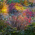 Bright Autumn Light by Byron Varvarigos