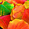 Bright Beautiful Fall Leaves by Sheila Kay McIntyre