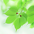 Bright Green Leaves by Imagewerks