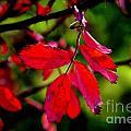 Bright Red by Ellen Heaverlo