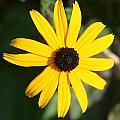 Bright Yellow by Barbara S Nickerson