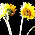 Brighten Your Day by Douglas Barnard