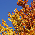 Brilliant Fall Color And Deep Blue Sky by Mick Anderson