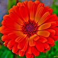Brilliant Orange No. 2 by Priscilla De Mesa