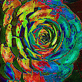 Brilliant Succulent by Jane Schnetlage