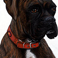 Brindle Boxer by Michelle Harrington