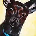 Brindle Chihuahua Ears by Jean Kieffer