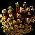 Close Up Of Pinecone by Jean Noren
