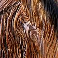 Bristlecone Pine Grain by Mike Norton