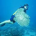Broken Coral by Alexis Rosenfeld
