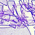 Broken Glass Purple by Susan Stevenson