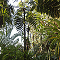 Bromeliad And Tree Ferns  by Cyril Ruoso