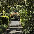 Brookgreen Gardens Path by Darleen Stry