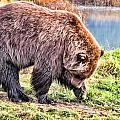 Brown Bear 201 by Dean Wittle