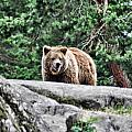 Brown Bear 209 by Dean Wittle
