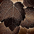 Brown Ivy by Chris Berry