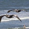 Brown Pelican by John Zawacki