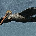 Brown Pelican Painterly by Ernie Echols