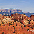 Bryce Beauty by Scotts Scapes
