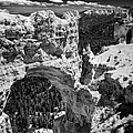 Bryce Canyon Arch - Black And White by Larry Carr