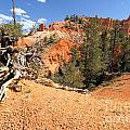 Bryce Canyon Canyon by Adam Jewell