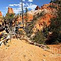 Bryce Canyon Forest by Adam Jewell