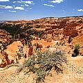 Bryce Canyon Overlook by Adam Jewell