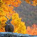 Buck In The Fall 04 by Metro DC Photography