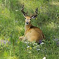 Buck What Are You Looking At by John Greaves