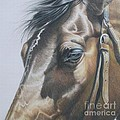 Buckles And Belts In Colored Pencil by Carrie L Lewis