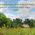 Buddha Quote On Blue Sky Above Field Of Sunflowers by Sarah Broadmeadow-Thomas