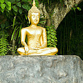 Buddha Statue Under Green Tree In Meditative Posture by U Schade