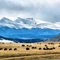 Buffalo Herd Painterly by Ernie Echols