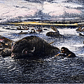 Buffalo Hunt, 1874 by Granger