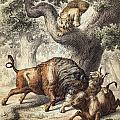 Buffalo & Lynx by Granger