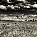 Buffalo Park Horizon by Joshua House
